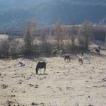 Cavalls peixent durant l'hivern - El poble Turisme Rural casa l'hereu