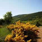 La primavera - El poble Turisme Rural casa l'hereu