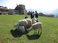 Turisme Rural casa l'hereu  :: Visita els animals del corral -