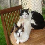 Parella de gats de Casa l'hereu. - El jardí de l'Estisora Turisme Rural casa l'hereu