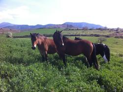 Cavalls  wakan - Rutes a cavall - Pallars - Vall Fosca - Activitats i Lleure Turisme Rural casa l'hereu