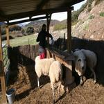 - Visita els animals del corral Turisme Rural casa l'hereu