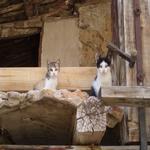 Els gats petits a l'antiga estisora de Casa l'Hereu. - Entorn Turisme Rural casa l'hereu