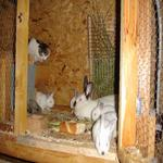 Els conills i la mixina vigilant. - Entorn Turisme Rural casa l'hereu