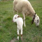 La llana i la seva cria peixent pel prat - Entorn Turisme Rural casa l'hereu