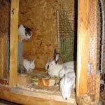 Els conills i la gata vigilant. - L'hort i el Corral Turisme Rural casa l'hereu