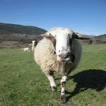 La Llana, la primera cria de Casa Hereu - L'hort i el Corral Turisme Rural casa l'hereu