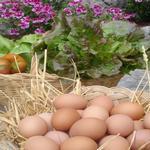 Detall dels ous i les verdures de la casa. - L'hort i el Corral Turisme Rural casa l'hereu